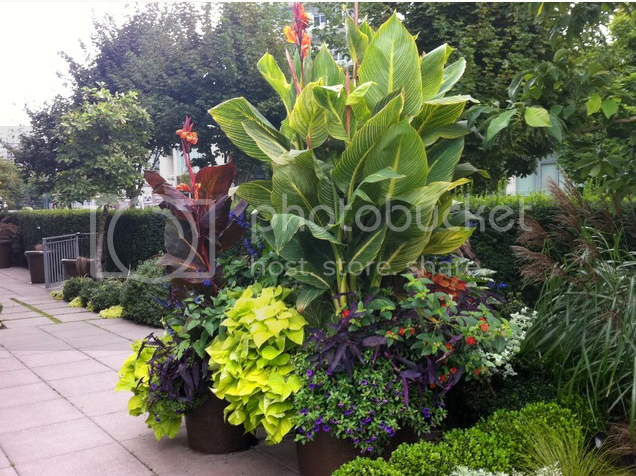 container garden from houzz.com